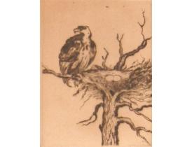 Рисунок Орёл и гнездо