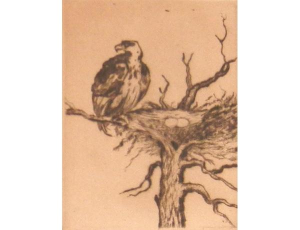 Рисунок Орёл и гнездо, AM1341