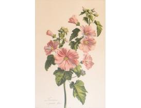 Настенная картина Полевой цветок